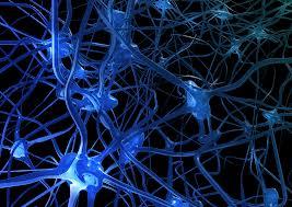 neuroni e sinapsi